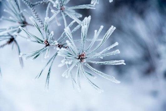 Dự báo thời tiết ngày 29/01/2016: Nhiệt độ ban ngày tăng