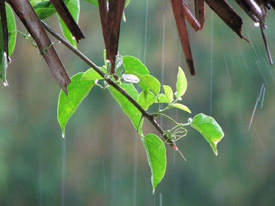 Dự báo thời tiết ngày mai 21/7/2016: Bắc Bộ mưa rào và dông rải rác