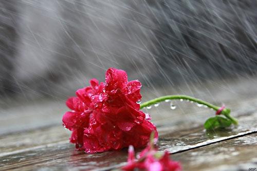Dự báo thời tiết ngày mai 31/10: Trời nhiều mây, có mưa rào rải rác
