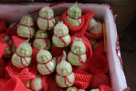 Dưa lê Thần tài nhìn tươi ngon nhưng chứa nhiều chất bảo quản độc hại đang được bán với số lượng lớn ra thị trường ngày Tết