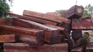 Nghi vấn công ty của Dũng Lò Vôi bán gỗ lậu