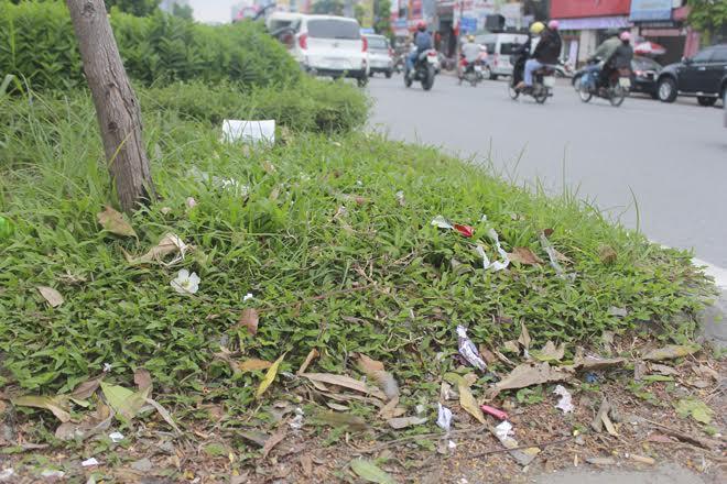 Lá cây lớn rụng xuống tạo nên một lớp rác trên bề mặt thảm cỏ xanh bên dưới