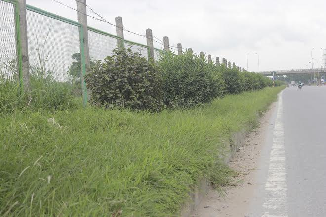 Tròn 1 tháng kể từ ngày 15/8, thành phố Hà Nội tuyên bố dừng cắt cỏ trên các tuyến phố thủ đô vì số tiền chi cho việc cắt cỏ hàng năm quá lớn, nhiều thảm cỏ trên các tuyến phố thủ đô trở nên rậm rạp, thiếu mỹ quan.