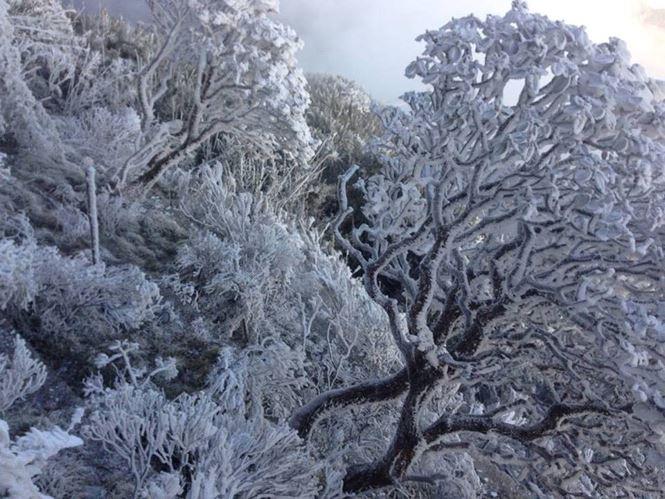 Cây cối được phủ một màu tuyết trắng. Ảnh: Tiền phong