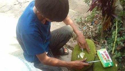 Trái cây ép chín bằng hóa chất tại cơ sở ở Đắk Lắk