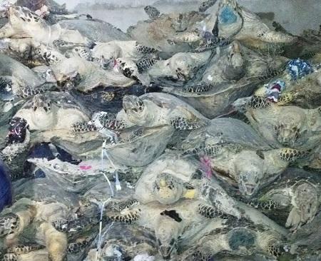 rùa biển, tiêu bản rùa biển, tội phạm môi trường