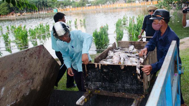 Ước tính có hàng tấn cá chết trắng kết thành mảng trên mặt hồ