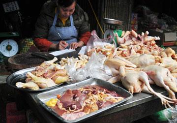 100% gà Trung Quốc nhập vào Việt Nam trái phép