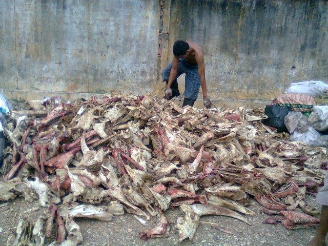 Nếu không bị phát hiện, lượng xương động vật hôi thối này sẽ được dùng làm bột nêm bán ra ngoài thị trường