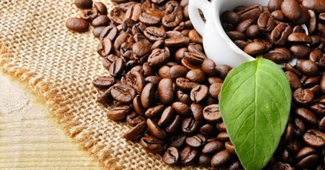 Giá cà phê hôm nay diễn biến theo đúng chiều hướng mà nhiều chuyên gia đã dự báo