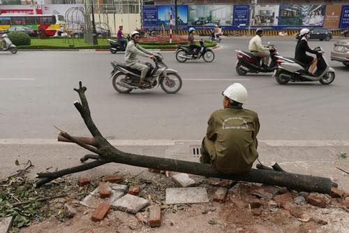 Hiện Hà Nội đã tạm dừng việc chặt hạ cây xanh và phê bình các đơn vị sai phạm
