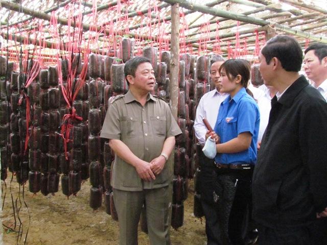 Hà Tĩnh đẩy mạnh trồng nấm chất lượng cao