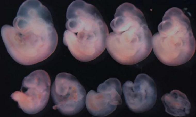 Điều trị vô sinh từ trứng nhân tạo