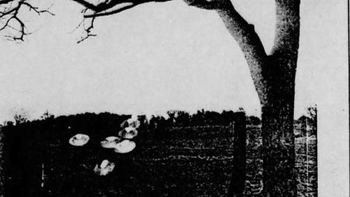 Hình ảnh được cho là của hiện tượng bí ẩn với nhiều đĩa bay xuất hiện trước một cái cây.