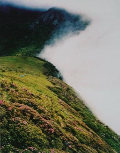 Màn sương được cho là nguyên nhân của mọi hiện tượng bí ẩn và sự mất tích diễn ra ở đây