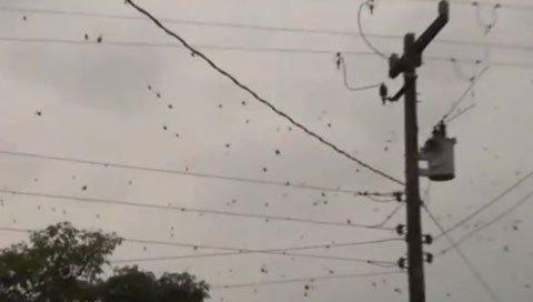 Hiện tượng kỳ lạ mưa nhện này cũng đã từng xảy ra ở Brazil năm ngoái