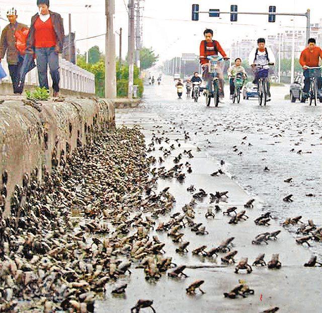 Hiện tượng lạ động vật tràn ra đường cũng đã từng sảy ra tại một thành phố Trung Quốc