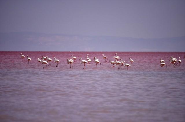 Hồ nước chuyển màu đỏ như máu là hiện tượng lạ thu hút sự chú ý của mọi người
