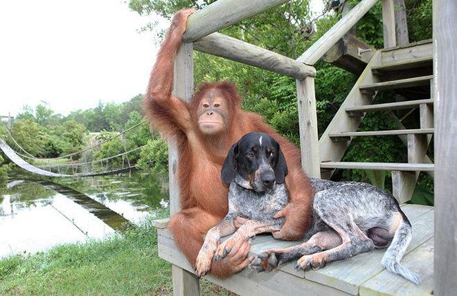Suryia và Roscoe dành 3 giờ mỗi ngày để chơi cùng nhau