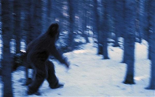 Người tuyết Yeti vẫn là một hiện tượng bí ẩn