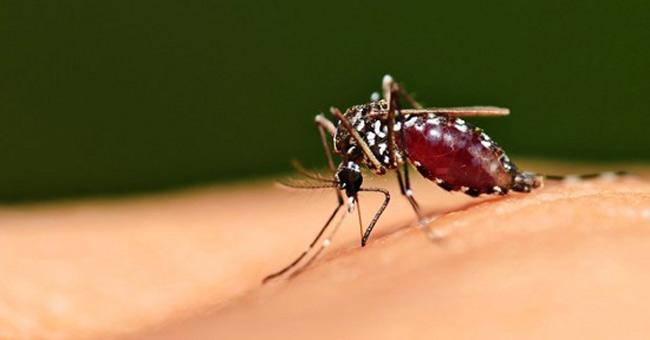 Tính đến nay Việt Nam đã nhập khẩu 9.500kg hóa chất diệt muỗi Pyriproxyfen
