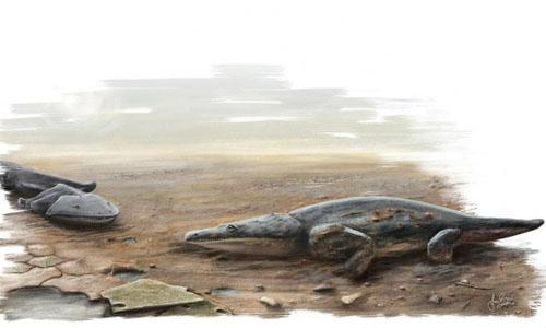 Hóa thạch của loài kỳ nhông khổng lồ có khích thước bằng chiếc ô tô