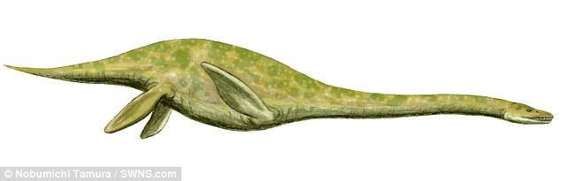 Hình minh họa loài plesiosaur có cổ dài 2,4 mét