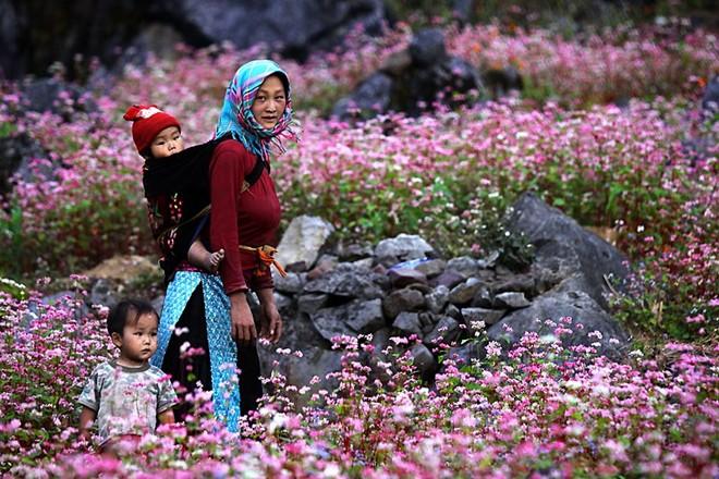 lạc lối giữa những con đường hoa đẹp nhất Việt Nam