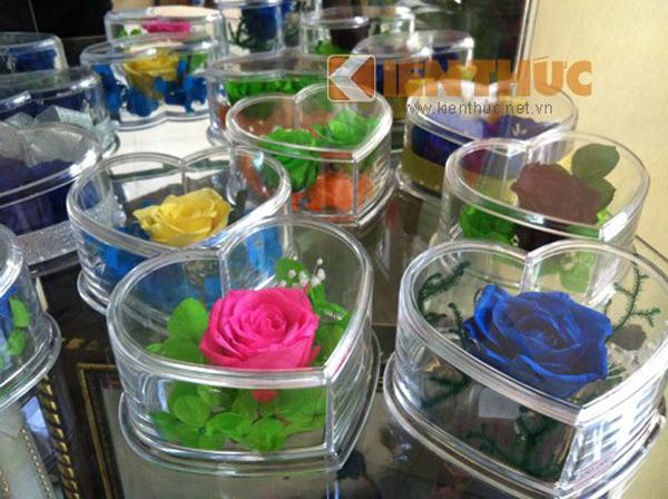 Hoa hồng bất tử, hoa hồng vĩnh cửu, hoa hồng 7 màu có giá từ 200-250 nghìn đồng