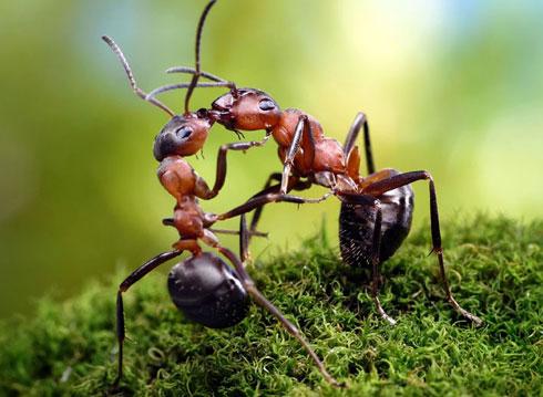 5 Bài học từ loài kiến về 'cách tồn tại tốt nhất trong cuộc đời' nếu bạn yếu ớt