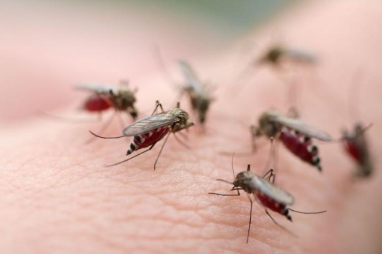 Chức năng đuổi muỗi trên điều hòa không phải ai cũng biết