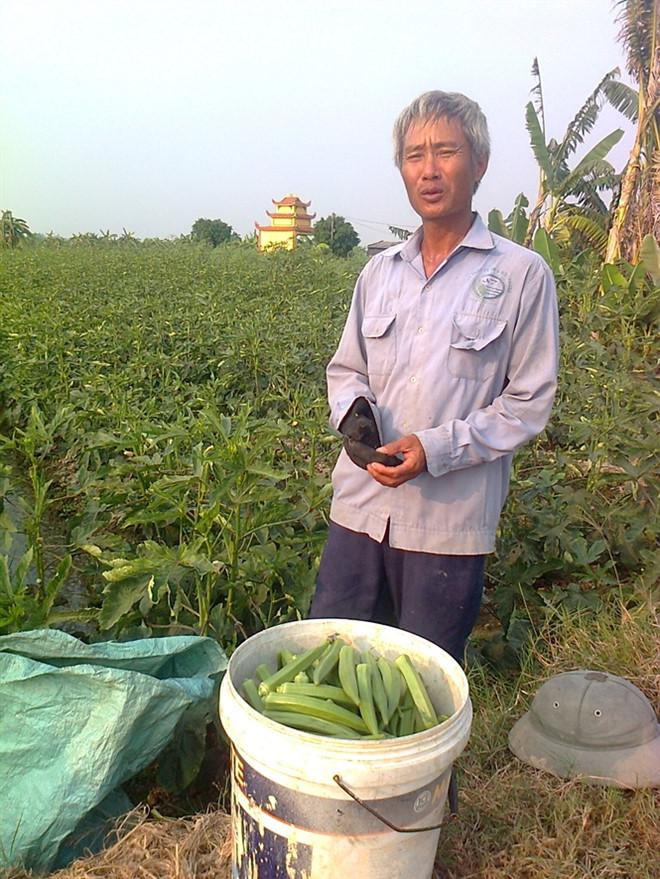 Nông dân làm giàu từ trồng đậu bắp thu bạc triệu mỗi ngày
