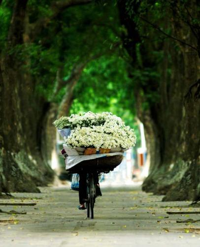 Tổng hợp các địa điểm chụp ảnh cúc hoạ mi tuyệt đẹp tại Hà Nội