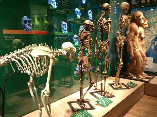 Phòng trưng bày tiến hóa sinh giới có diện tích gần 300m2, xây dựng tại tầng 1 của Bảo tàng hiện nay - nhà A20, số 18 đường Hoàng Quốc Việt, Cầu Giấy (Hà Nội) với cấu trúc gồm ba phần: