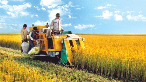 Khoa học thúc đẩy nông nghiệp phát triển