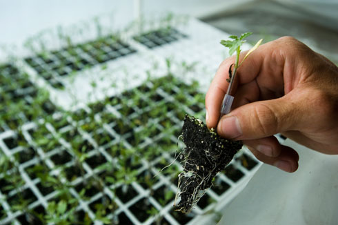 Ứng dụng công nghệ sinh học nâng cao năng suất cây trồng
