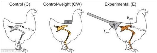 Nghiên cứu mới về bước đi của khủng long bạo chúa T-Rex