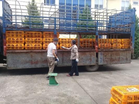 Cao Bằng: Lực lượng Hải quan bắt giữ hơn 1 tấn gia cầm, xúc xích có nguồn gốc Trung Quốc