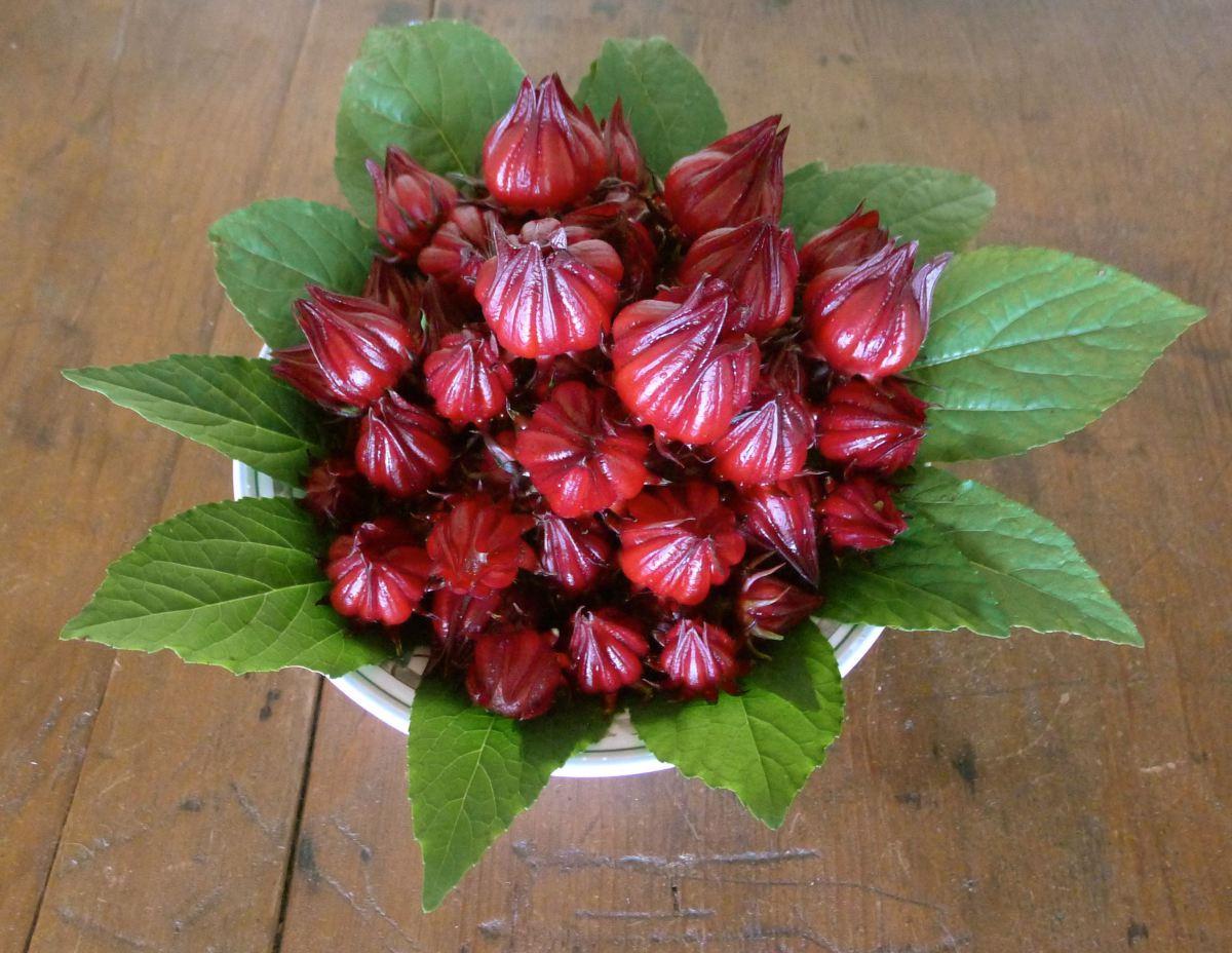 Cách làm mứt hoa Atiso đỏ đơn giản mà lại phù hợp để nhâm nhi trong những ngày tết