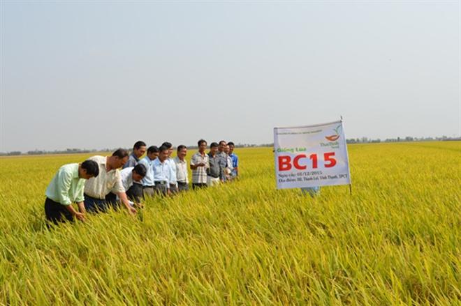 Thái Bình: Nâng cao năng suất, chất lượng nhờ giống lúa tốt - ảnh 1