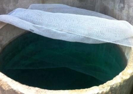 Bể nước của gia đình ông Hoa chuyển màu xanh ngắt, nổi bọt trắng nghi bị hạ thuốc độc