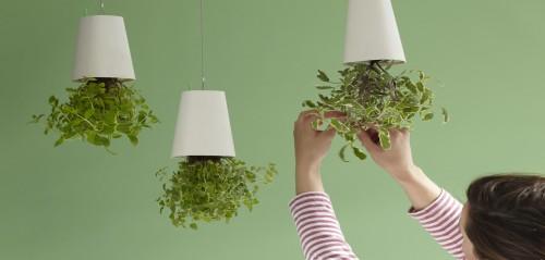 Trang trí cây xanh trong nhà bằng các chậu cây treo ngược là một ý tưởng mới mẻ