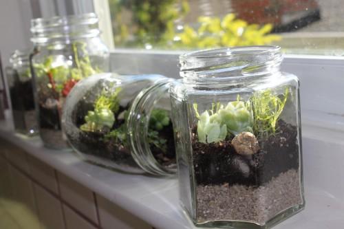 Những chiếc bể cá nhỏ có thể tạo thành một khu vườn mini ấn tượng