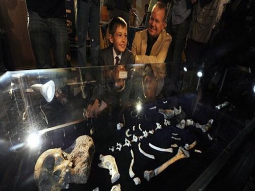 2 bộ xương cổ này đang được trưng bày tại bảo tàng