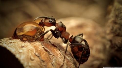 Loài kiến thông minh hơn con người vẫn nghĩ