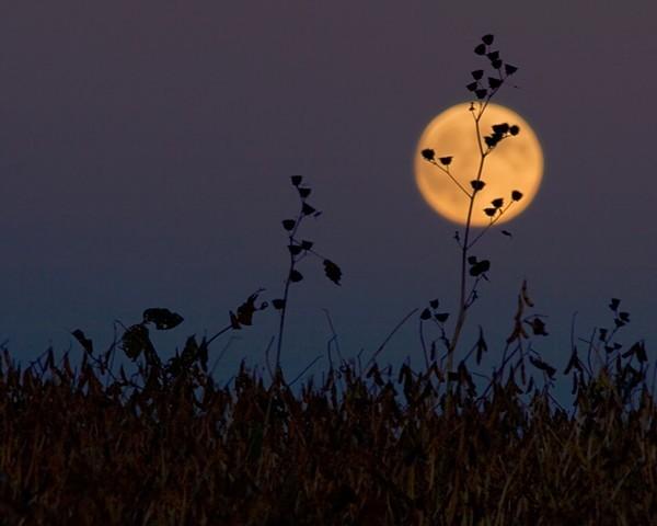Hiện tượng siêu trăng được cho là sẽ xuất hiện vào đêm trước nhật thực