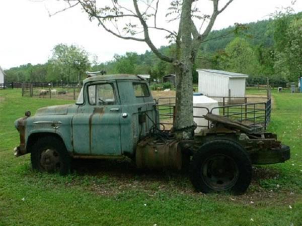 Khám phá thế giới tự nhiên về cây mọc xuyên xe tải thu hút được nhiều sự chú ý tại Mỹ