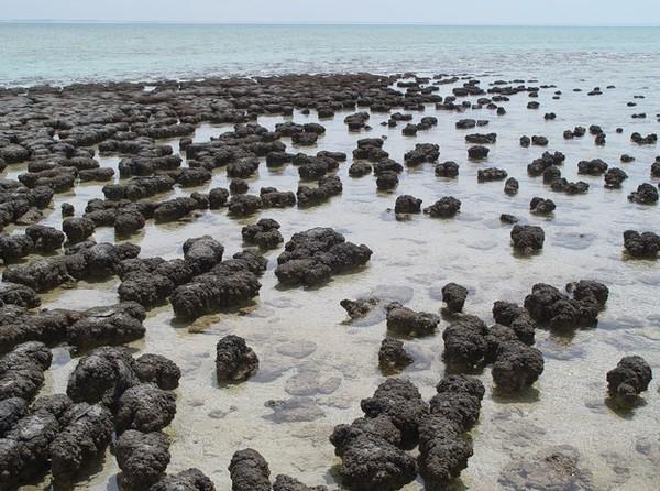 Loài vi khuẩn lâu đời này trú ngụ trên đá trầm tích hàng chục triệu năm