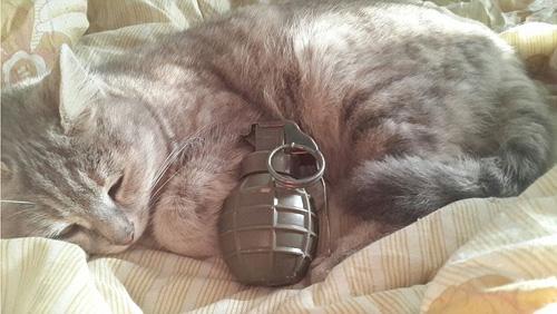 Tổ chức khủng bố IS dùng ảnh mèo để dụ trẻ em tham gia đánh bom tự sát