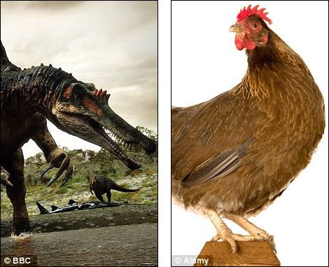 Khủng long có thể được tái sinh từ ...gà